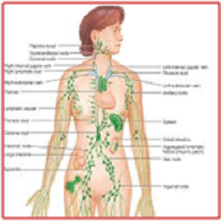 Boost Your Immune System, Lymphatic Drainage Therapy Fights Infection